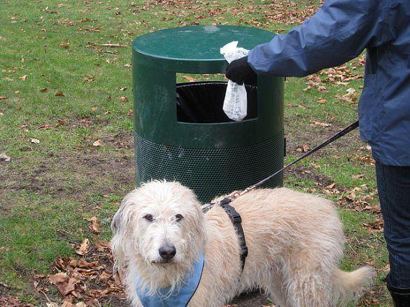Lanciano, controlli a tappeto su rispetto norme per detentori di cani