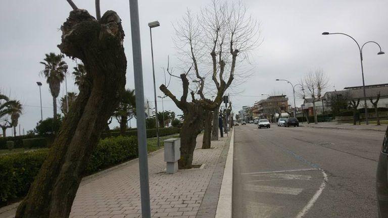 Conalpa contro Giulianova Patrimonio e Comune: 'non rispettate salute e natura del verde'