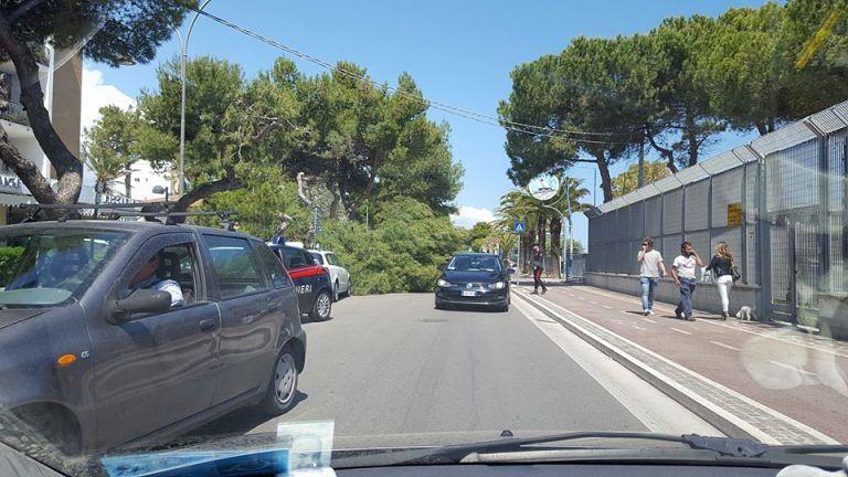 Giulianova, pino cade sul lungomare Spalato FOTO