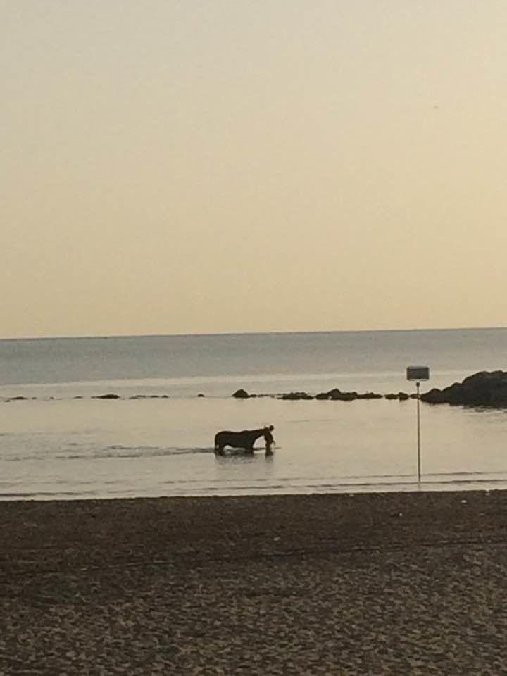 Pescara, feci sulla spiaggia: sono di cavallo