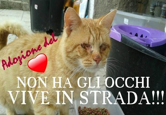 Ortona, gatto senza occhi vive in strada: cercasi aiuti
