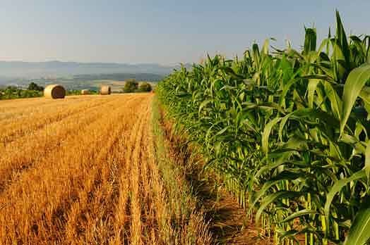Agricoltura Abruzzo, Febbo: 'Situazione paradossale'