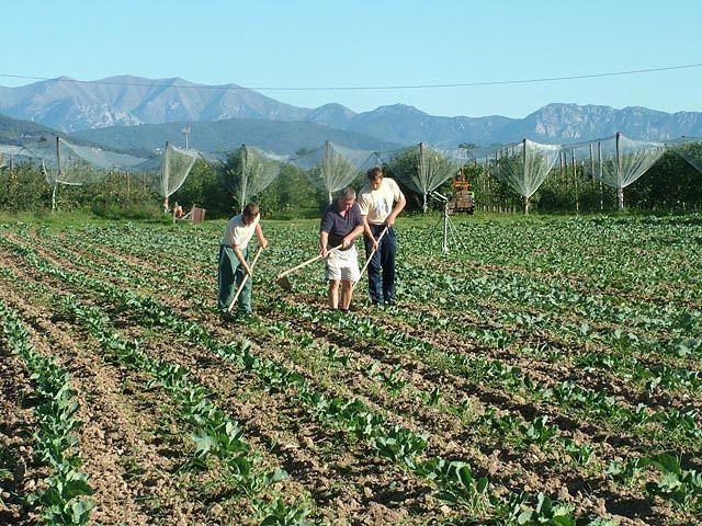 Roseto e quell'idea di agricoltura sociale