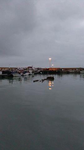 Giulianova, grossi tronchi d'albero in mare e nel porto dopo la piena dei fiumi (FOTO)