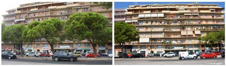 Pescara, taglio degli alberi: esposto in Procura