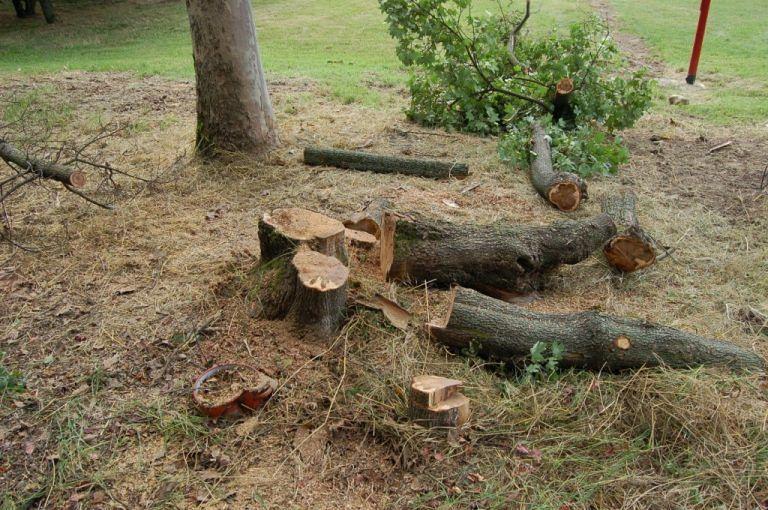 Pescosansonesco: taglia alberi nel Parco Nazionale, denunciato