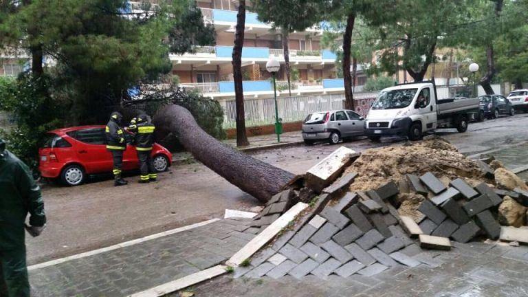 Pescara, 37 alberi ripiantati in via Regina Margherita