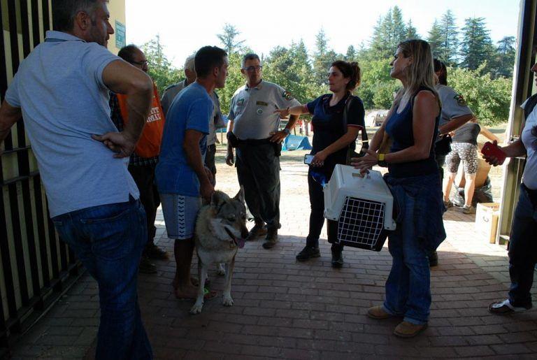Montesilvano, il Dog Village offre ospitalità agli animali delle zone colpite dal terremoto
