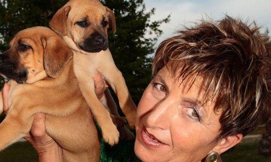 Ragazzino cerca di rubare un pitbull: presa a catenate la direttrice del Dog Village di Montesilvano