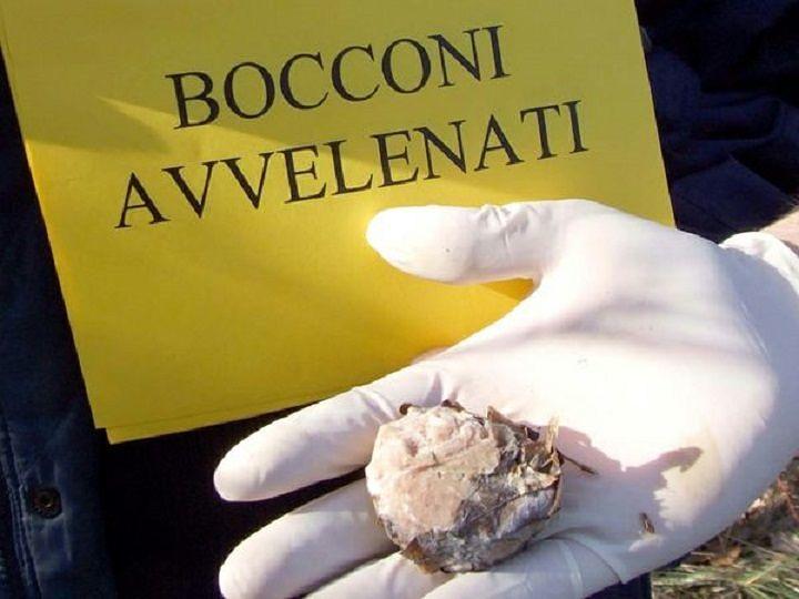 Abruzzo, presentata la legge sulle esche avvelenate