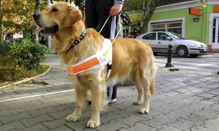 Rimini, albergo rifiuta non vedente a causa del cane guida