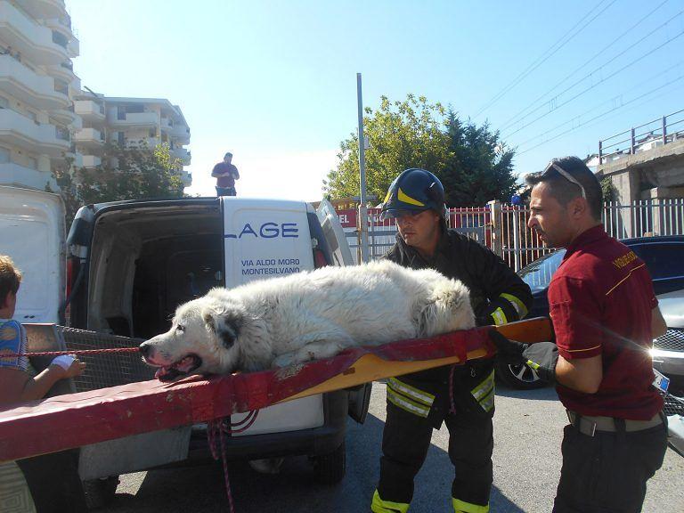 Montesilvano, cane ferito finisce vicino ai binari: salvato FOTO-VIDEO