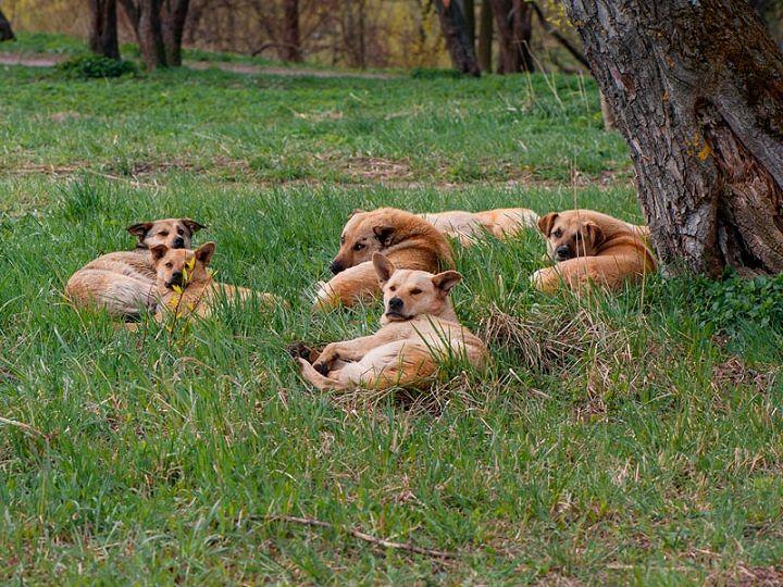 Parco Abruzzo, oltre 1000 cani registrati e vaccinati
