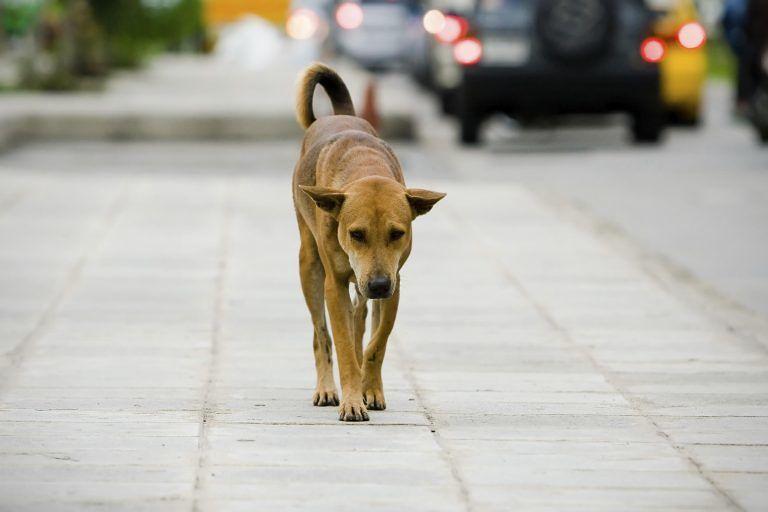 Teramo, lotta al randagismo: vigili sanzionano il proprietario di un cane