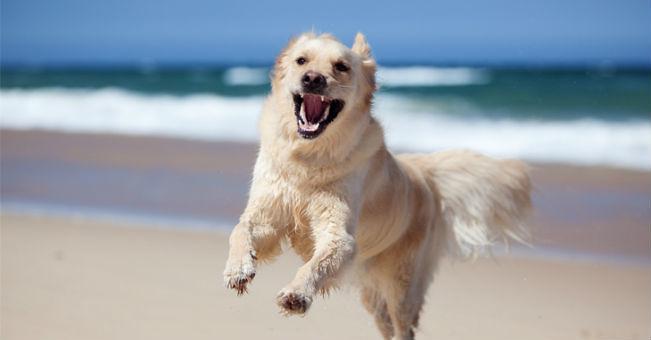 Pescara, sì all'accesso degli animali in spiaggia