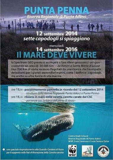 Punta Penna, WWF ricorda spiaggiamento capodogli del 2014: 'Adriatico di nuovo in pericolo'
