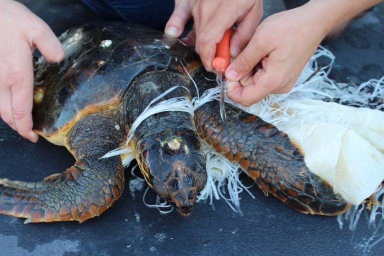 Pescara, escono in mare per liberare 2 tartarughe: i volontari ne salvano una terza