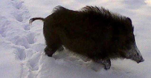 Neve e freddo in Abruzzo, nuovo appello WWF: 'D'Alfonso sospenda la caccia'