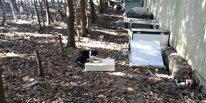 Martinsicuro, rimossi i rifugi nella colonia felina: scoppia la polemica