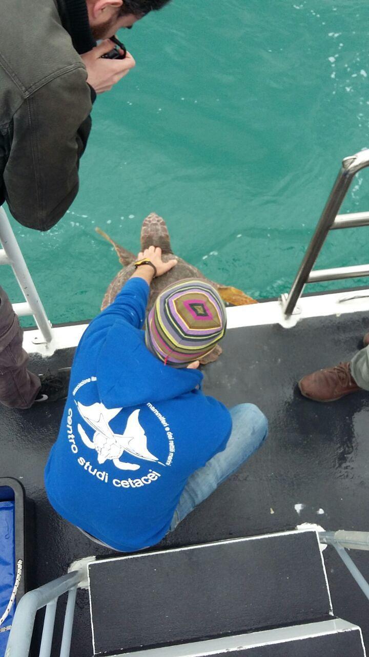Pescara, sei tartarughe tornano in mare dopo le cure