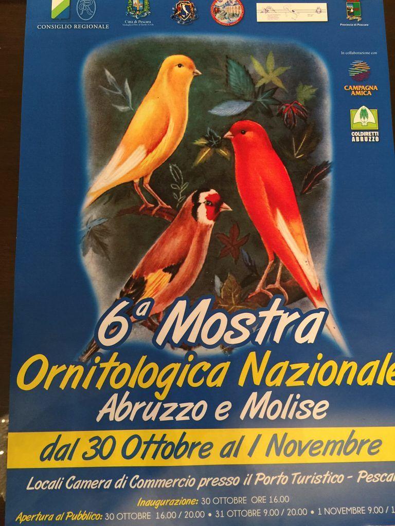 Pescara, al via la Mostra ornitologica: oltre 2000 esemplari di volatili