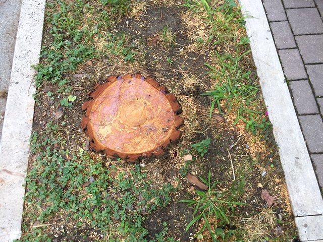 """Pescara, ancora polemiche sul taglio degli alberi: """"Tre pini abbattuti per errore, è caos"""" FOTO"""
