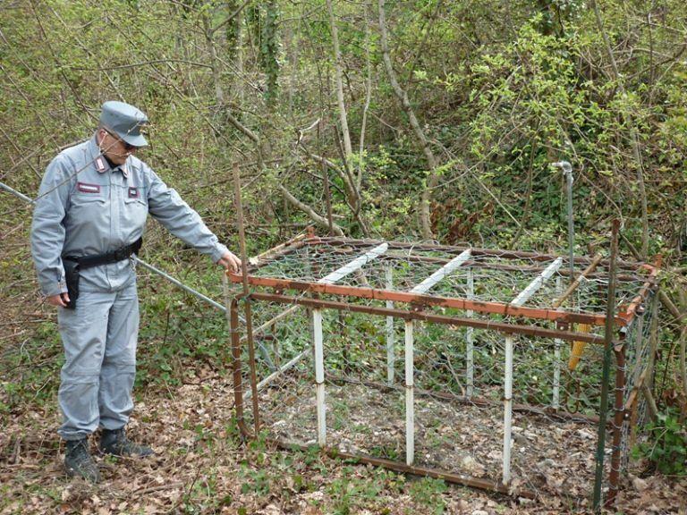 Fano Adriano, Forestale scopre trappola per grandi animali