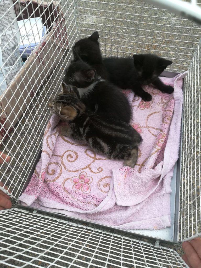 Montesilvano, 4 gattini abbandonanti salvati da una donna