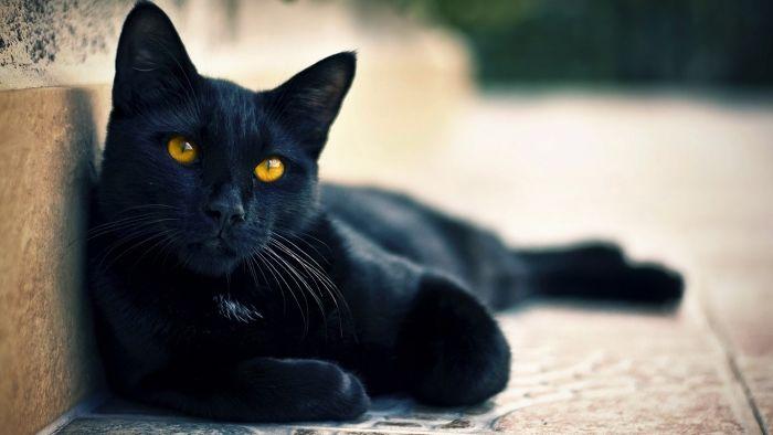 """Pescara, bando sulla gestione dei gatti randagi: Diodati """"Abbiamo operato in modo corretto"""""""