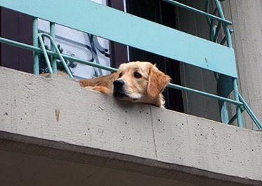 Cane segregato sul balcone in provincia di Teramo