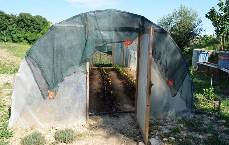 Serra di marijuana scoperta nelle Marche: teramano finisce ai domiciliari