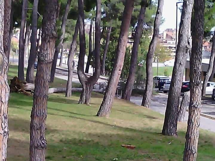 Teramo, vento forte in tutta la provincia: cade albero al Mazzini FOTO