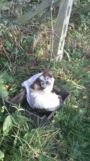 Tortoreto, cagnolina legata ed abbandonata FOTO