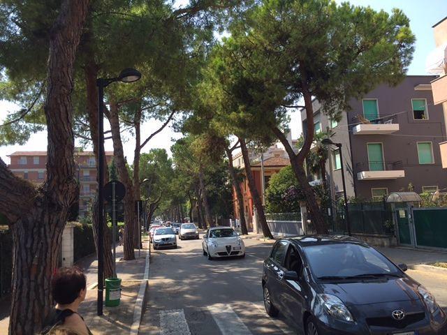 Stilato il piano per ripiantare gli alberi in 11 strade di Pescara