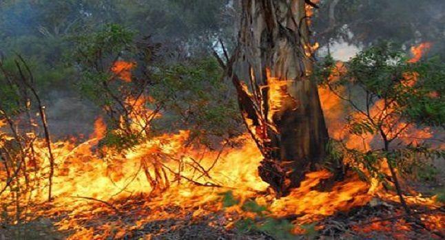 Casacanditella, bosco incendiato: denunciato presunto autore