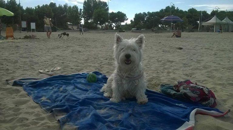Giulianova, il divieto non c'è e i cani restano in spiaggia