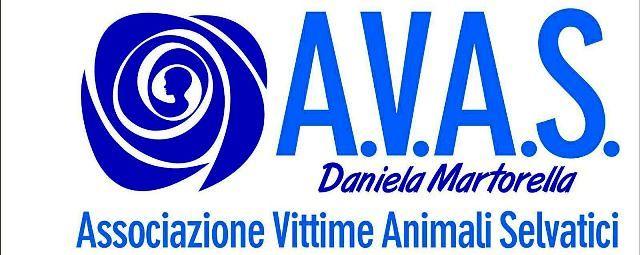 Bomba, presentazione ufficiale dell'Avas intitolata a Daniela Martorella