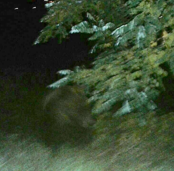 Abbateggio, un orso avvistato nel centro abitato