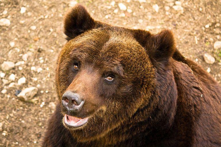 WWF Abruzzo: 'Preoccupante situazione di stallo per tutela orso marsicano'