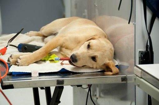 Pescara, servizio veterinario Asl: gli animalisti chiedono controlli