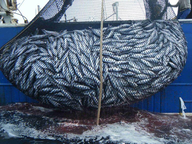 Pescara, nasce l'associazione dedicata alla pesca: on-line l'avviso pubblico