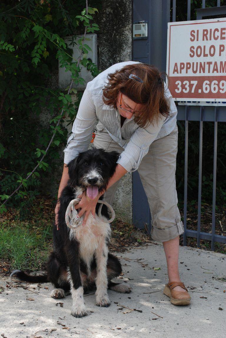Cucciolo investito due volte e salvato da una turista e dal Dog Village di Montesilvano