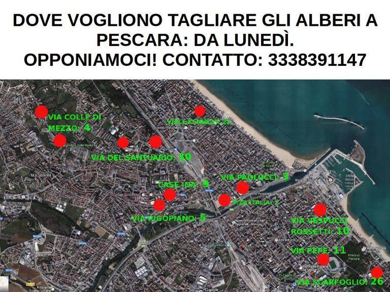 Pescara, partono i sit-in degli ambientalisti contro il taglio degli alberi VIDEO