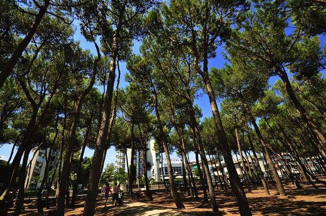 Alba Adriatica, vigilanza notturna per tutta l'estate alla bambinopoli e in pineta