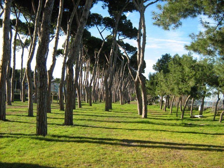 Pineto, riqualificazione della pineta storica: Forza Italia presenta una mozione