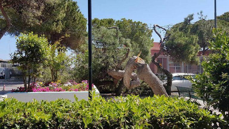 Giulianova, Conalpa su pino crollato: 'cambiare gestione del verde'