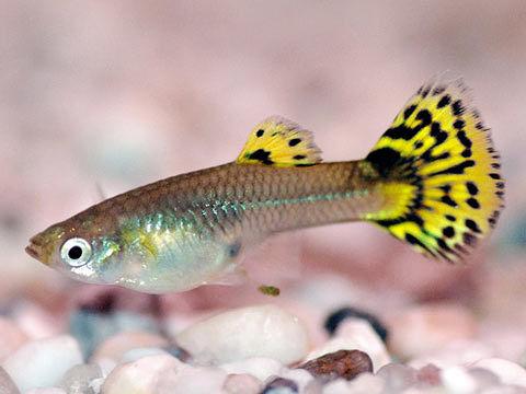 Popoli, Congresso degli ittiologi: oltre 100 studiosi della fauna fluviale