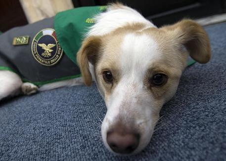 Pizzoferrato, al via il progetto sperimentale 'Adotta un cane'