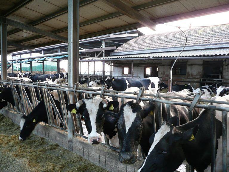 Abruzzo, SOS caldo: Coldiretti lancia allarme per mucche, maiali e api