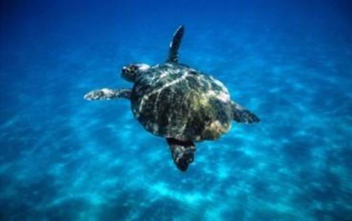 Pescara, 6 tartarughe tornano in mare dopo le cure degli esperti